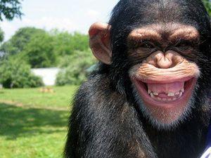mono que se ríe